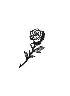 Rose Petit Prince